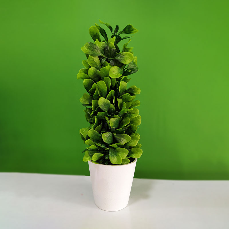 Beautiful Evergreen Leaf with Pot