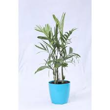 Bamboo Palm Self Watering Pot 20 cm